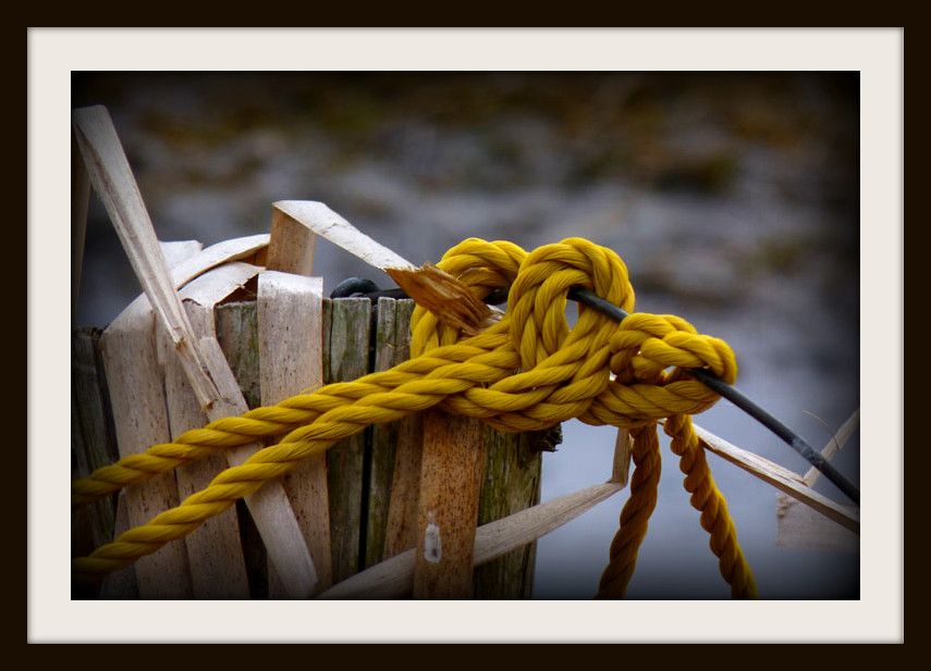 The Yellow Knots