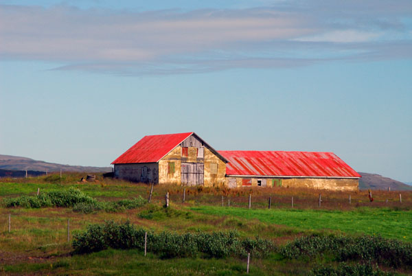 Farm in Iceland, route 37