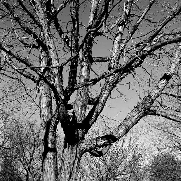 Tree at Woodmere