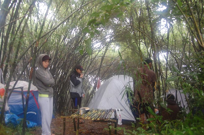 Under the Bamboo Trees