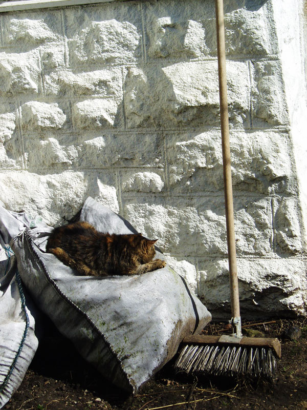 cat on a cold coal sack