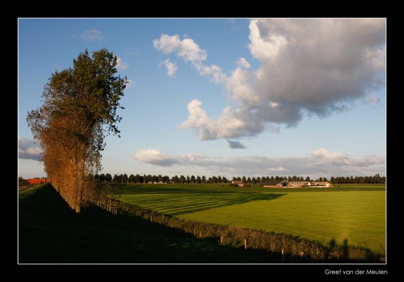 8918 long shadows in Dutch landscape