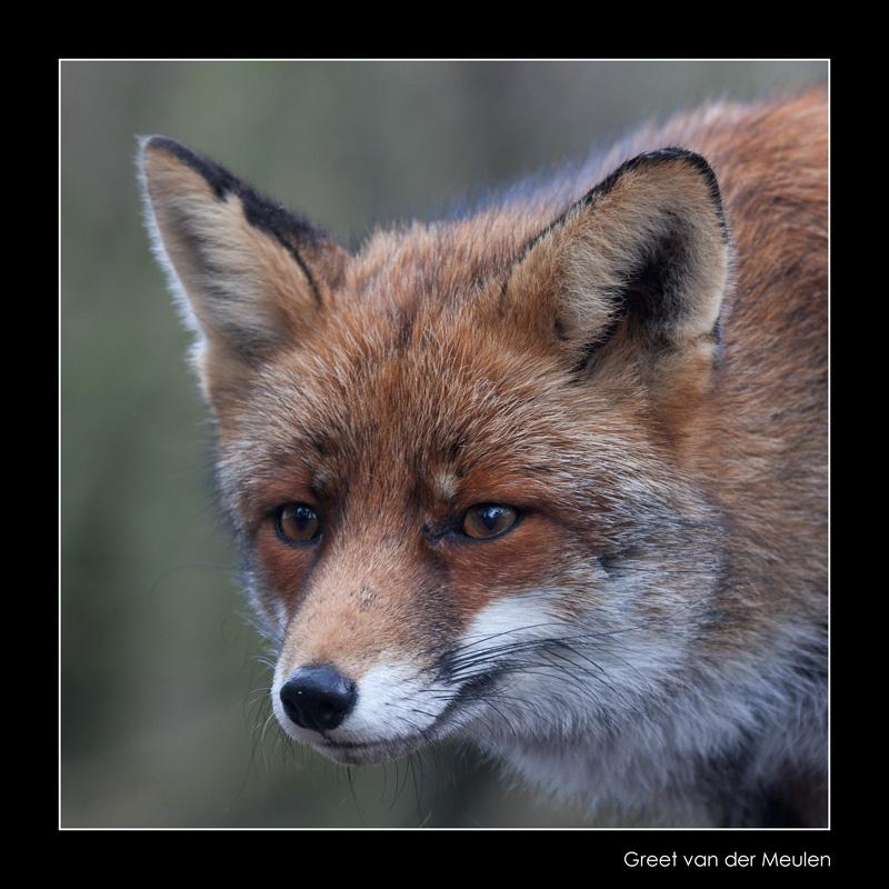 4723 fox