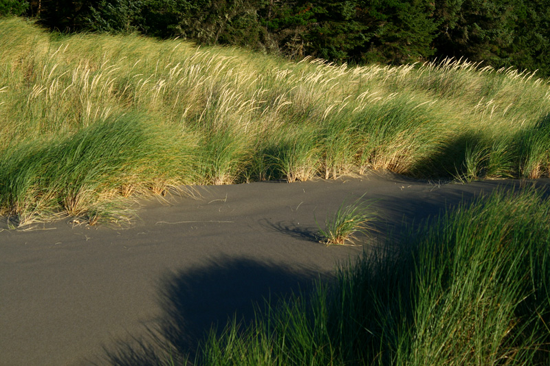 Seagrass and shadows