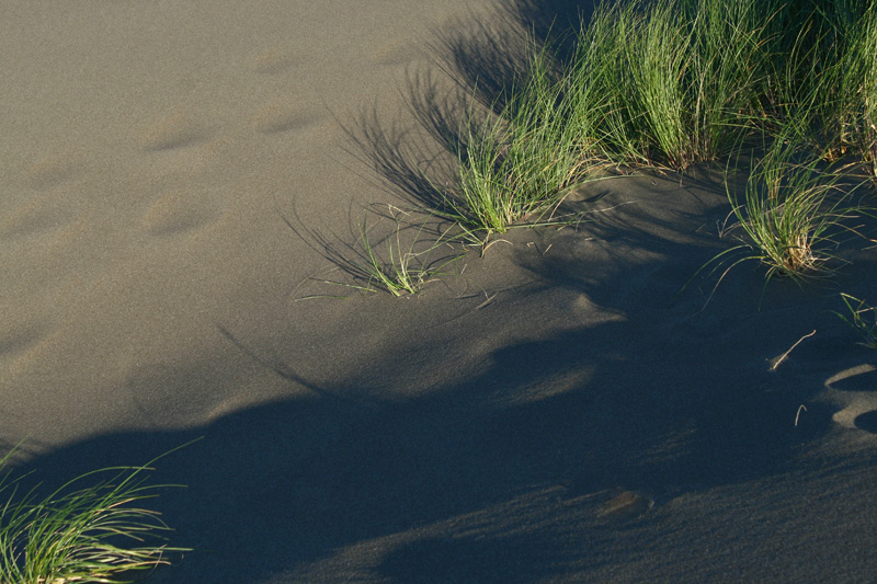 Seagrass against Dune