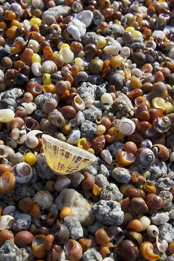 IMG_5903.jpg Shells on beach - Point Penmarch France - © A Santillo 2014