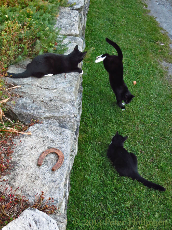 Rosie, Rocky and Jimi