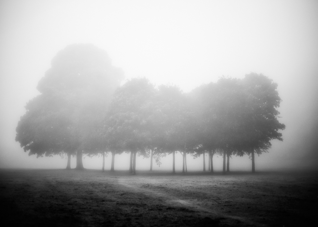 The Fog Came Down.