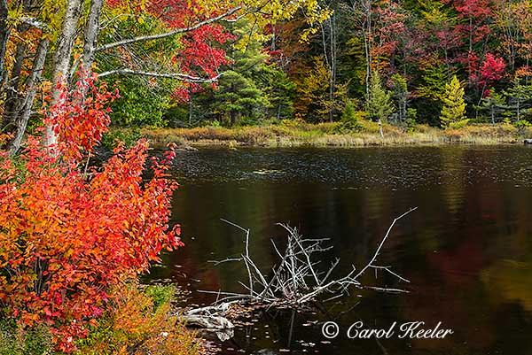 Pond Across from 7th Lake, Adirondacks