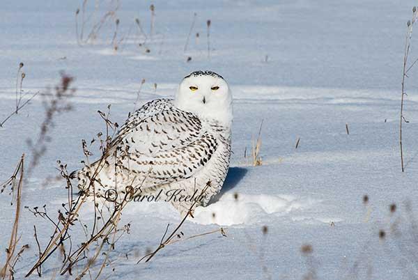 Snowys Landing