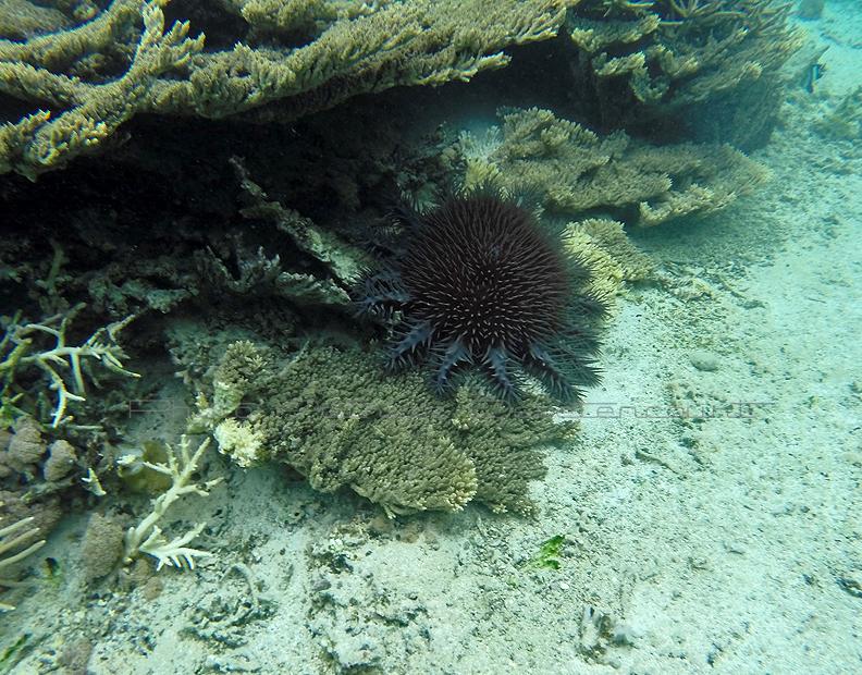 388 Mauritius island - Ile Maurice 2014 - GOPR2028_DxO Pbase.jpg