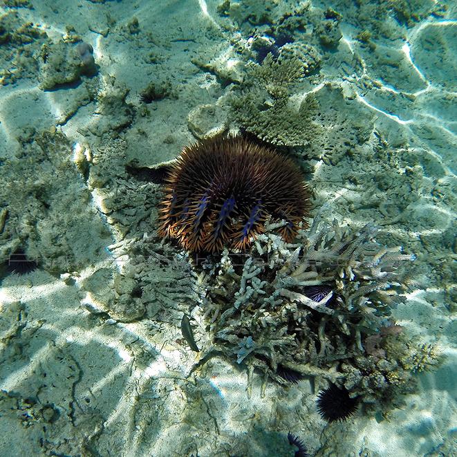 1086 Mauritius island - Ile Maurice 2014 - GOPR2915_DxO Pbase.jpg