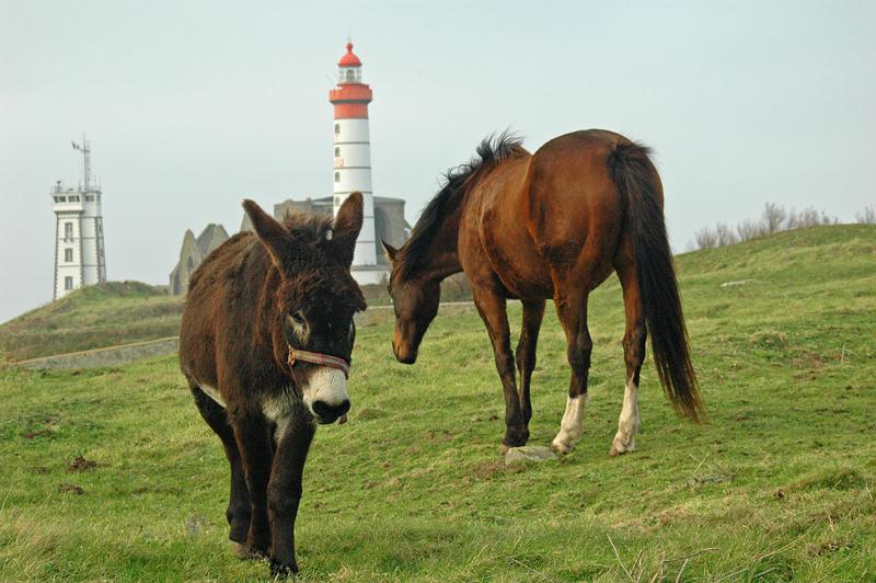 Cheval et âne Pointe Saint Mathieu - 2006