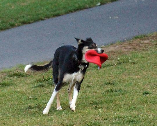 Dogs 08497 copy.jpg