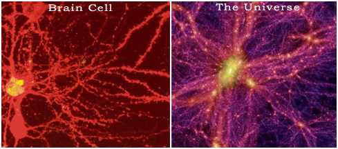 The universe and a brain cell look the same