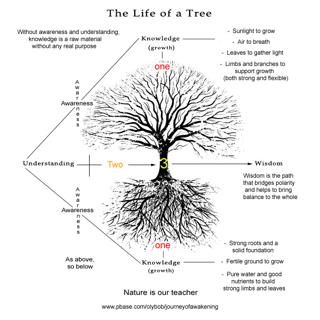 The life of a tree - knowledge, wisdom and understanding