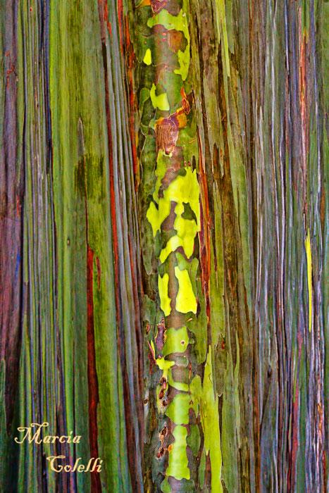 EUCALYPTUS TREE BARK_9188.jpg