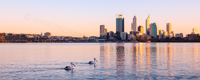 Pelicans on the Swan River at Sunrise, 9th August 2012