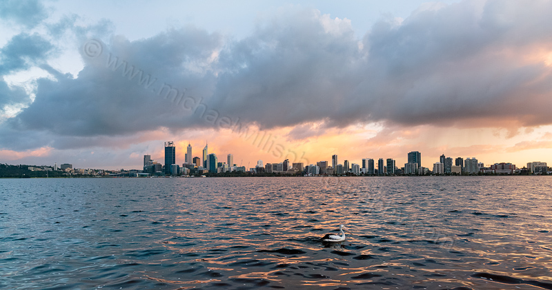 Pelican on the Swan River at Sunrise, 20th September 2013