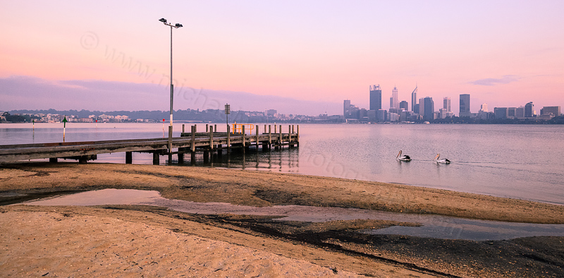 Pelicans on the Swan River at Sunrise, 4th November 2015