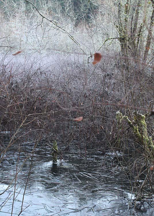 09 frost, ice in wetlands