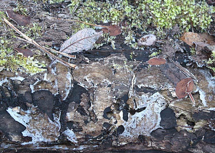 14 frosty log