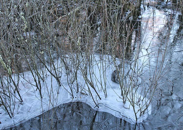 18 ice island willows