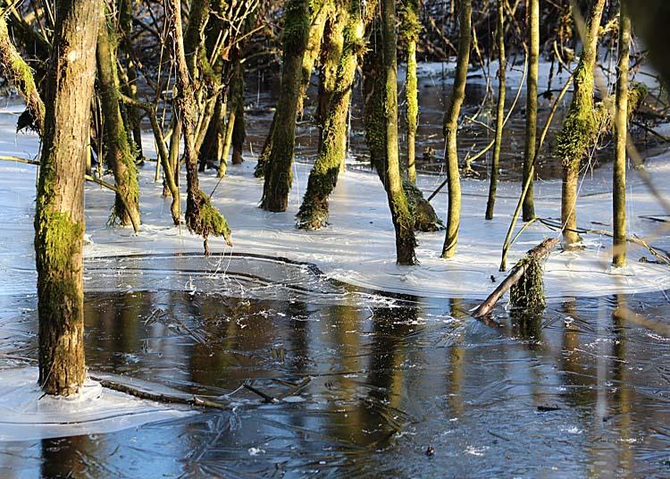 48 winter wetland sun