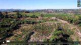 Les oliviers et les vignobles de Venterol près de la maison Bommenel