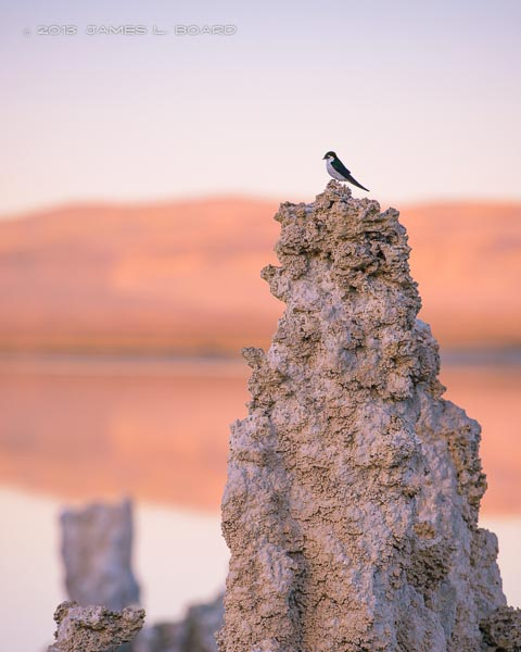 Bird on Tufa Column