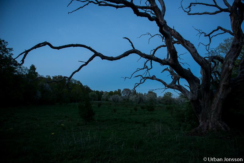 Läggdags, skymningen faller över Narnia.
