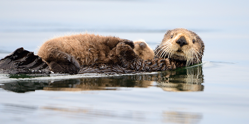 A Couple of Sea Otters etc.