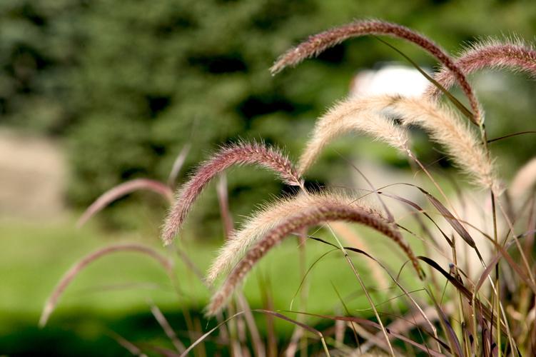 brins d herbe 3.jpg
