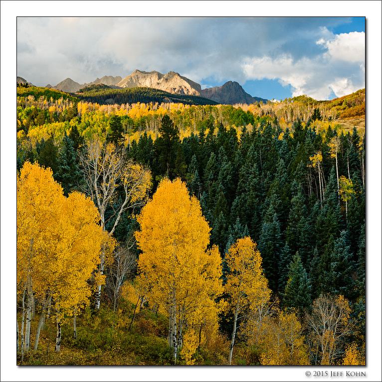 Aspen Along East Dallas Creek Road, Uncompahgre National Forest, Colorado, 2015