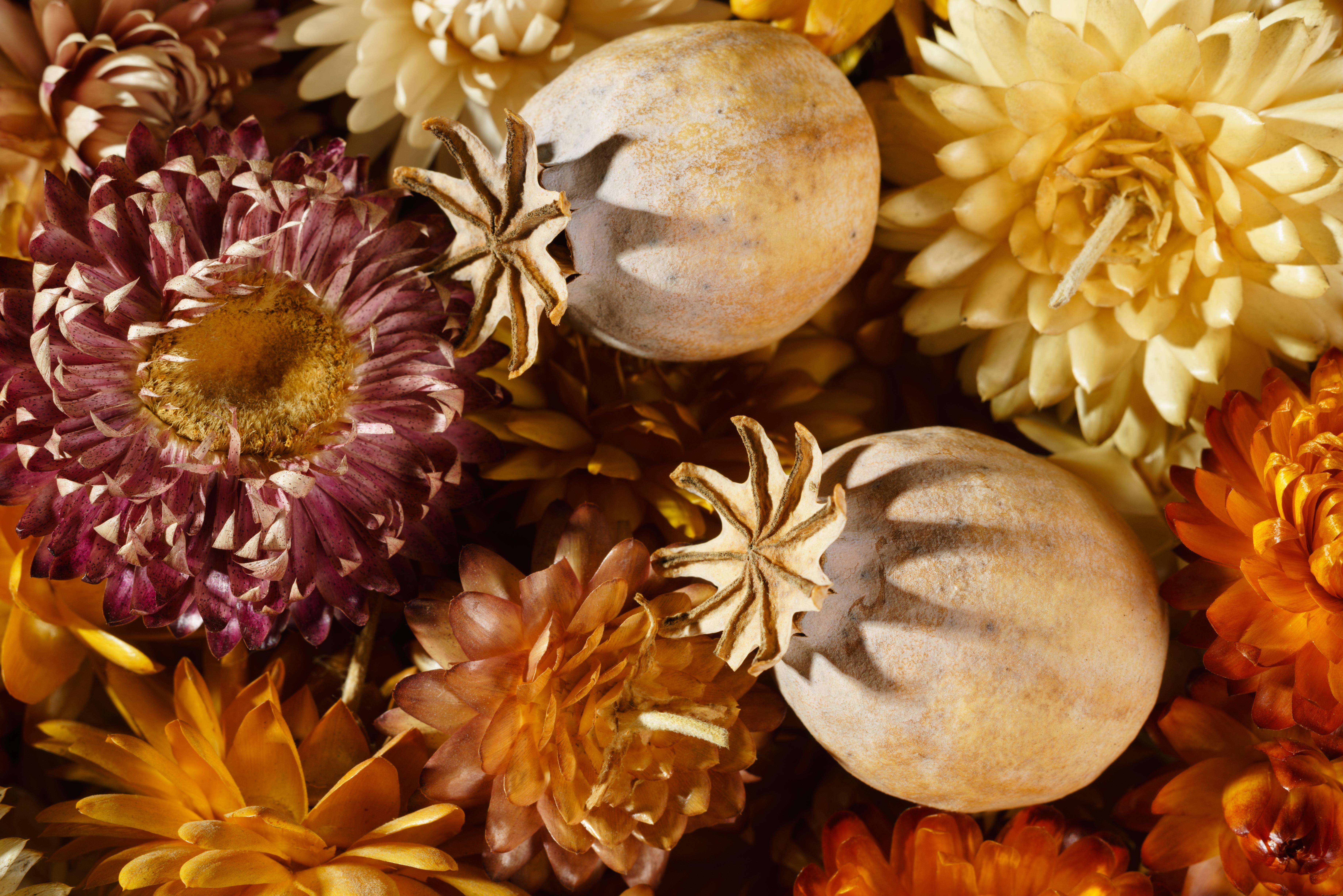 driedflowermacro-cleaned-srgb.jpg