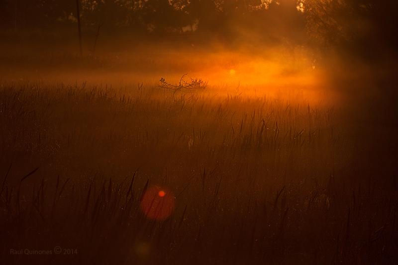 Sunrise at Green Cay wetlands