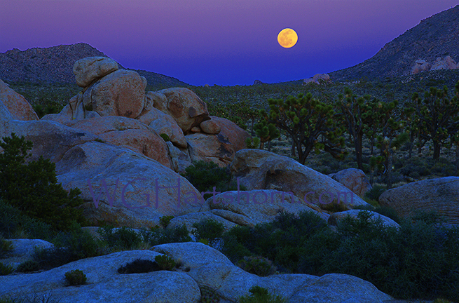 Joshua Tree Moonrise