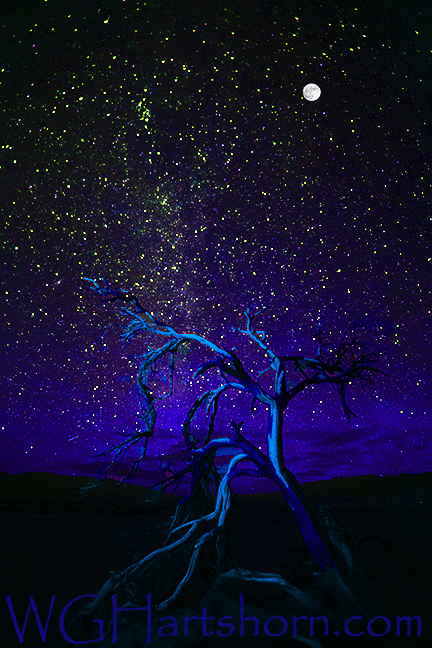 Ghost Tree Starlight Blue