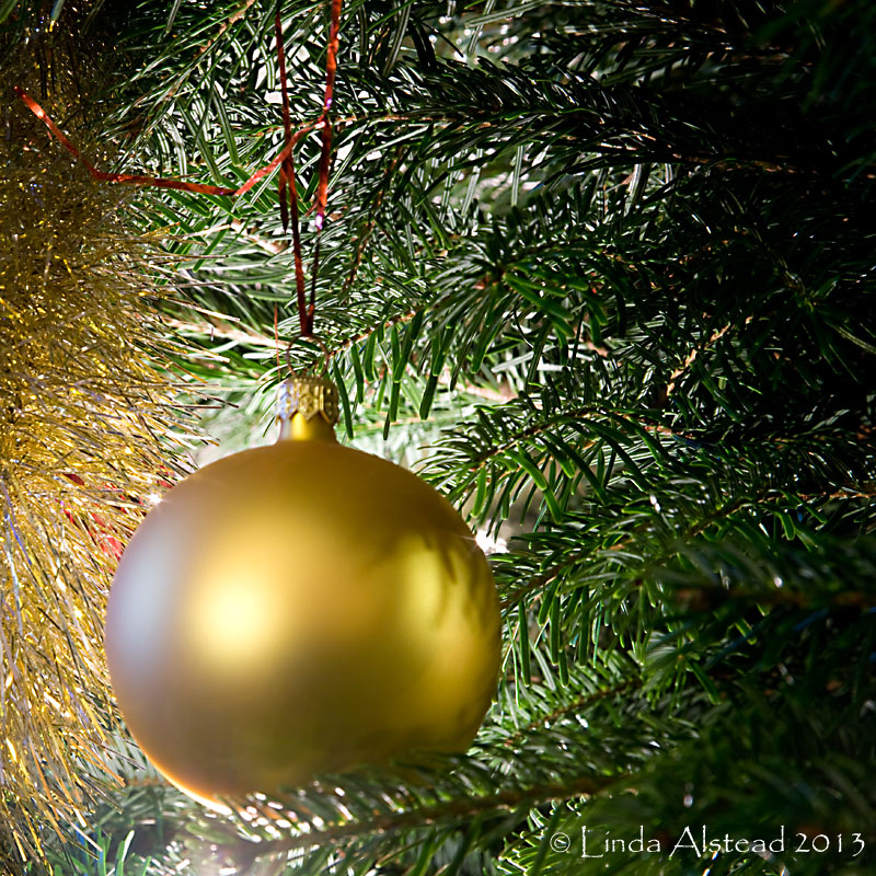 14th December 2013 - the tree is up