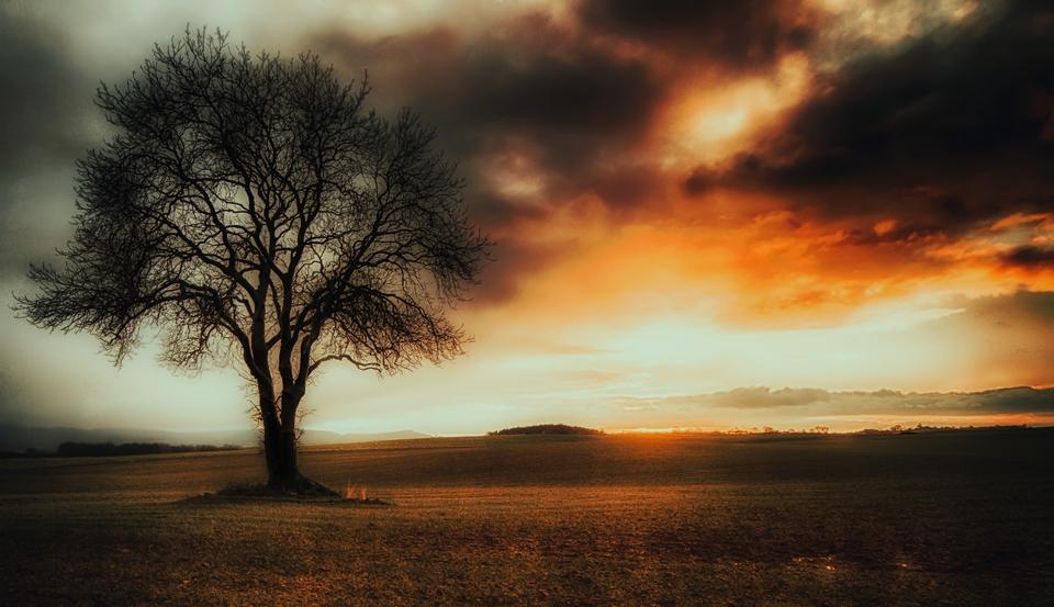 IMAGE: http://www.pbase.com/image/164772238/original.jpg