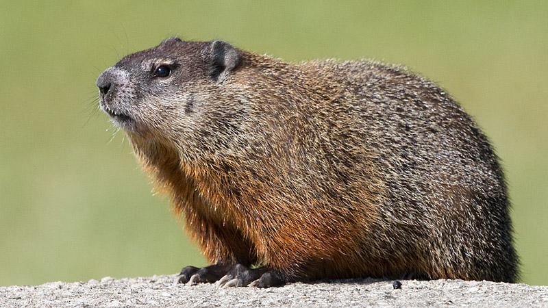 groundhog 7