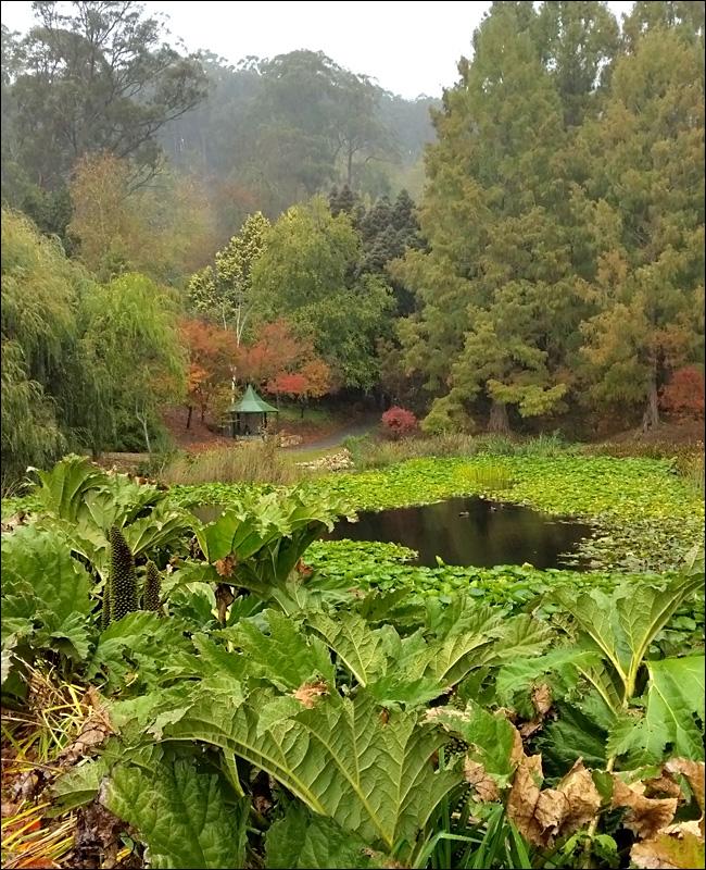 Mt Lofty Botanic Garden in the Rain