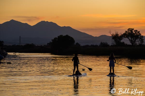 Paddle Boards, Indian Slough  1