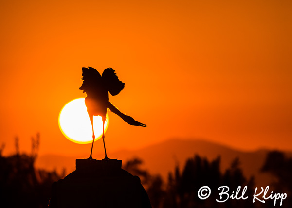 Great Blue Heron Sunset 1