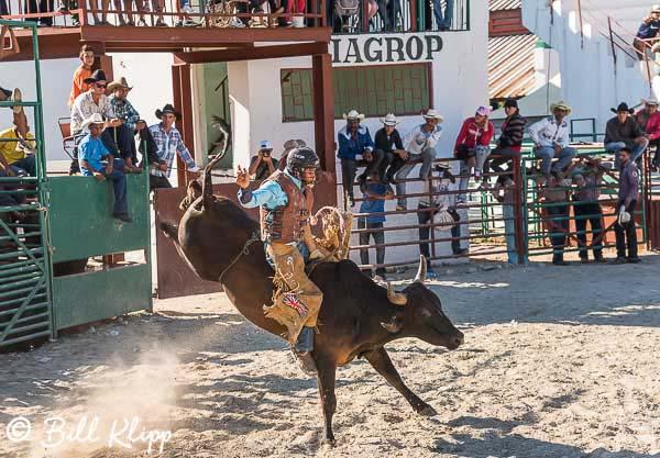 Bull Riding, Cuban Rodeo 1