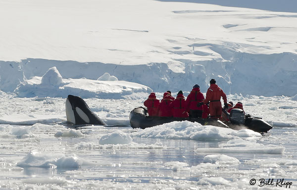 Orca, Dorian Bay 1