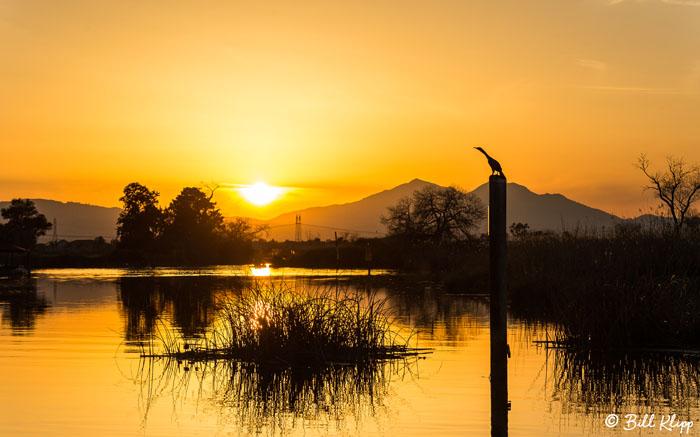 Cormorant Sunset   2