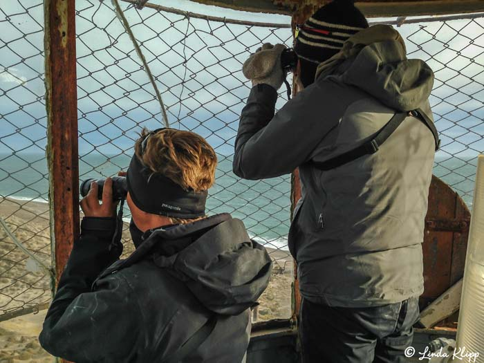 Scanning for Orcas 1