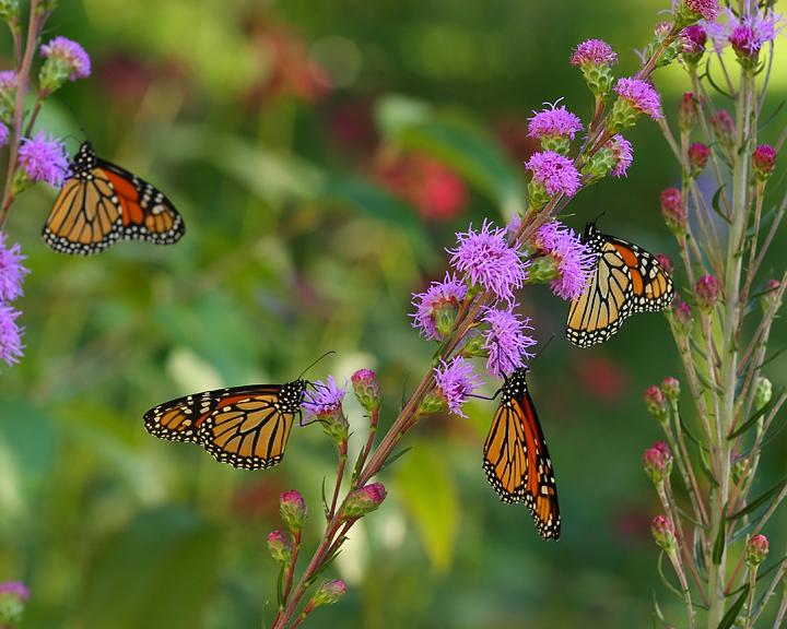 IMAGE: http://www.pbase.com/gymell/image/161227613/original.jpg
