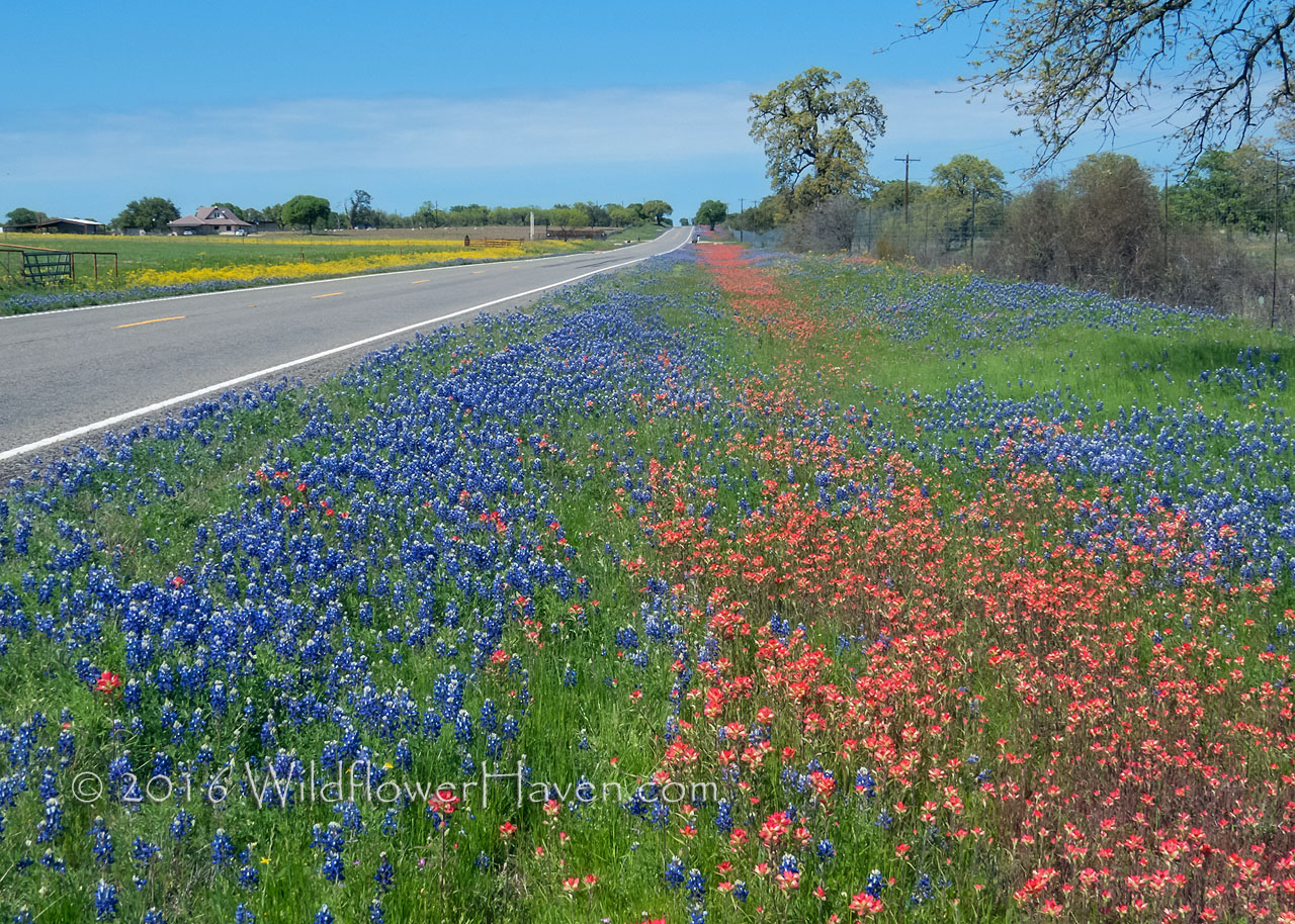 Red and Blue along Texas 16